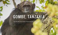Google Maps теперь позволяет прогуляться по танзанийскому парку с шимпанзе