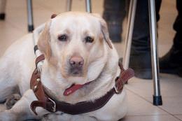 В Москве у слепой девушки украли собаку-поводыря