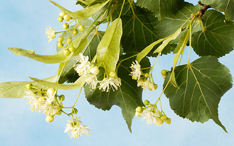 Аллергия: как выжить среди этой бесконечной пыльцы
