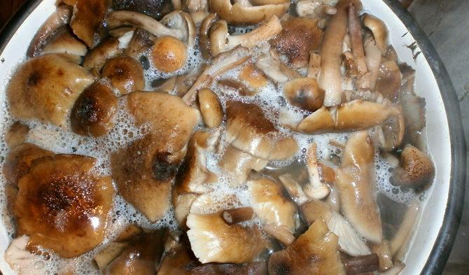 Маринованные рыжики рецепт быстро чтобы сразу есть