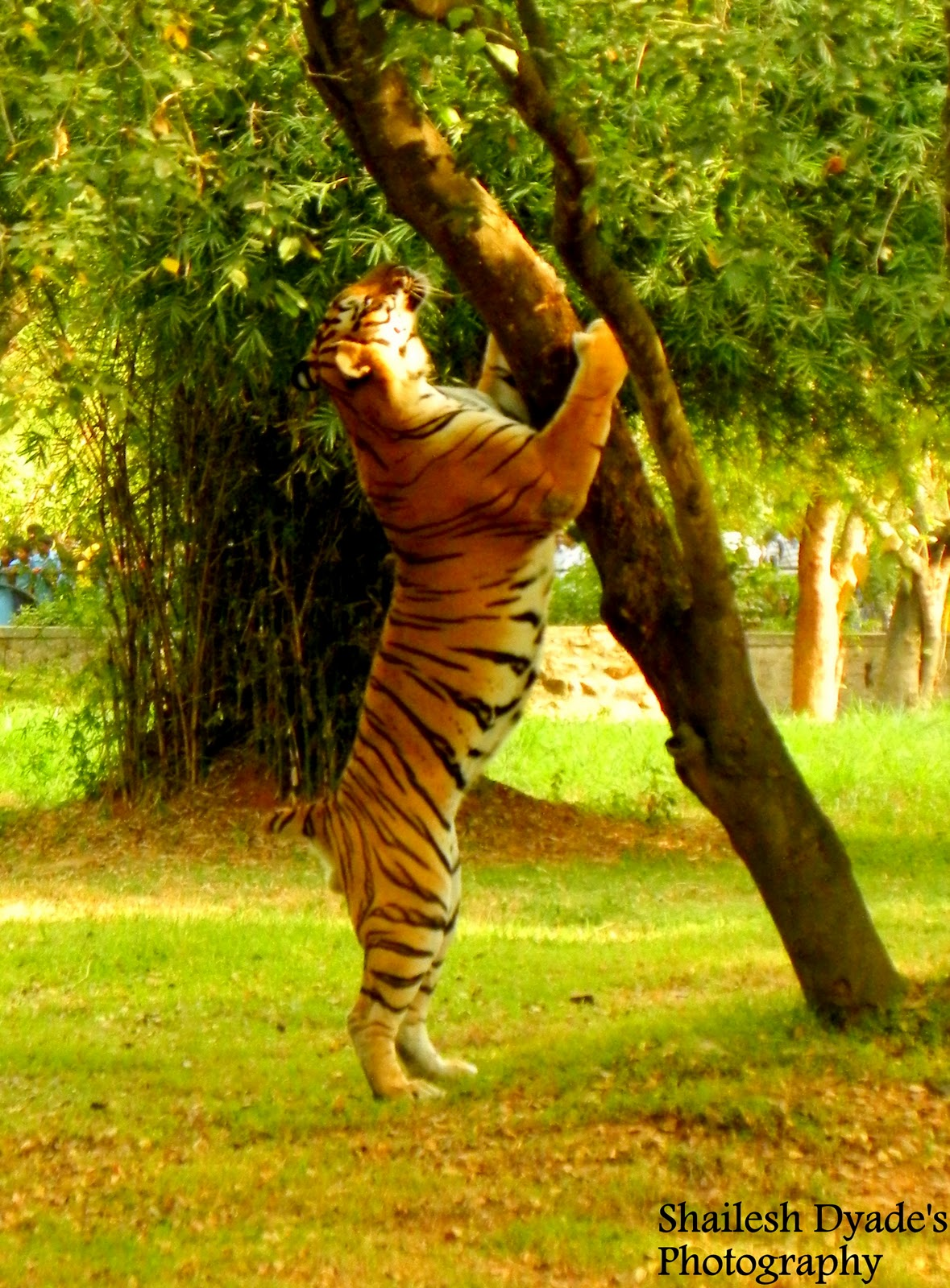 hindi essay on tiger Long essay on tiger in hindi language free essays on essay on indian tigers in hindi for students use our touchstone wants to marry audrey, he does not want it.