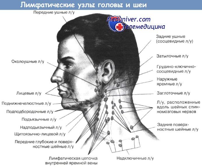 Болят лимфоузлы на шее причины у ребенка