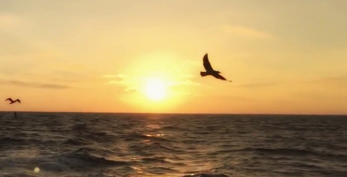 Arrival of the Birds From The Crimson Wing: Mystery of