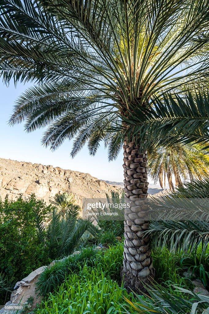 Dating palm desert