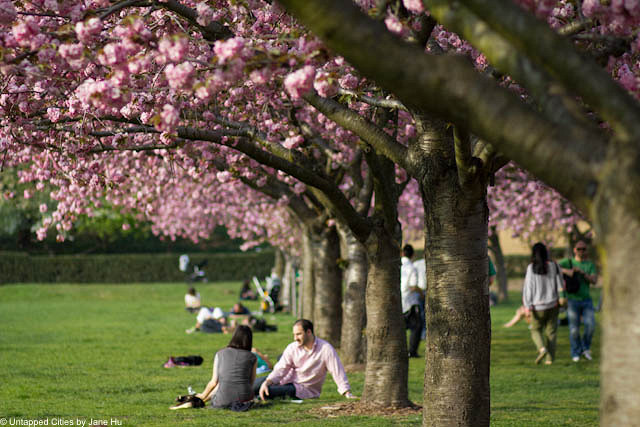 Cherry blossom dating scams