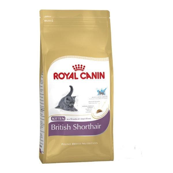 Persian корм royal canin cat food