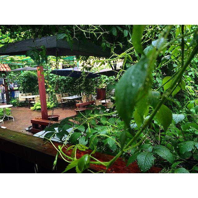 Ресторан Венера - фотография 3