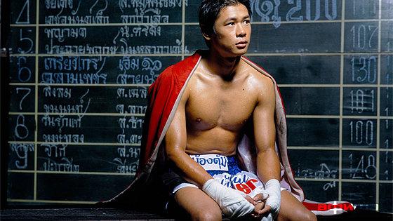 Прекрасный боксер смотреть фото