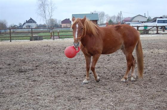 Фото конный клуб «Воля»