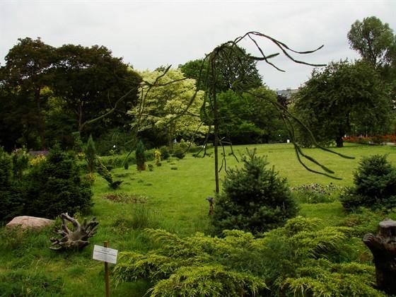 Фото ботанический сад