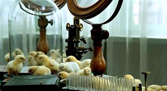 Роковые яйца смотреть фото