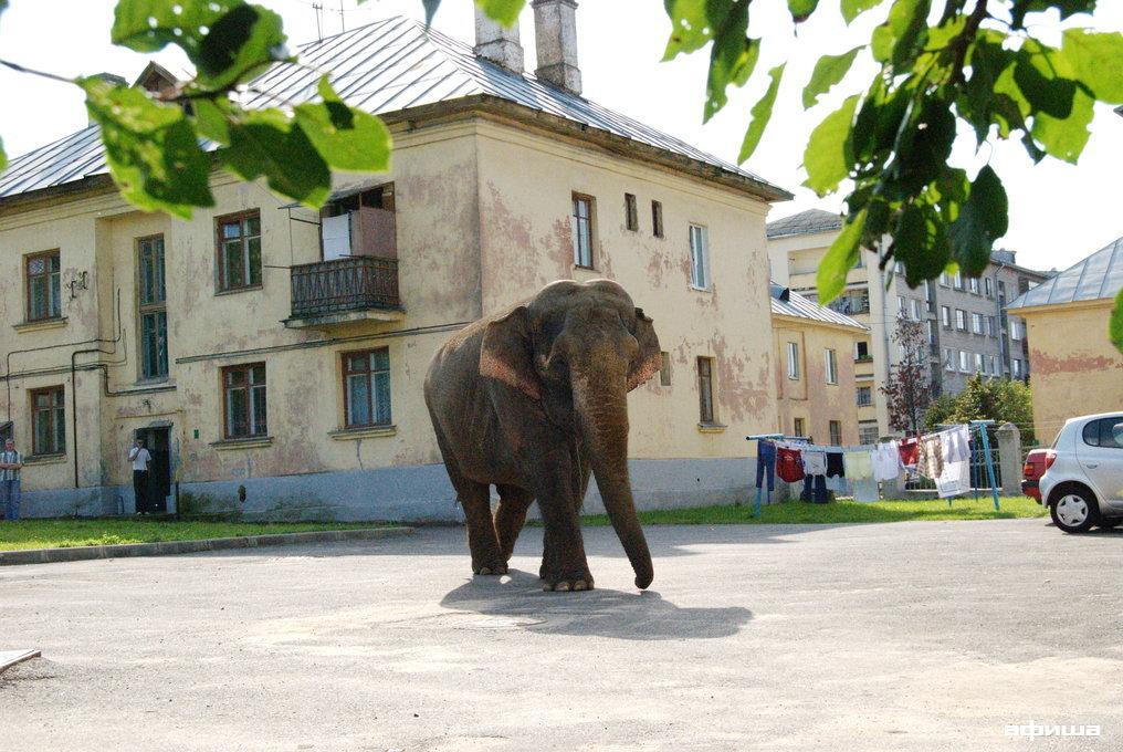 Слон смотреть фото