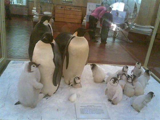 Фото музей Арктики и Антарктики