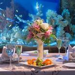 Ресторан Fantasia del Mare - фотография 4 - В окружении подводного мира средиземноморья