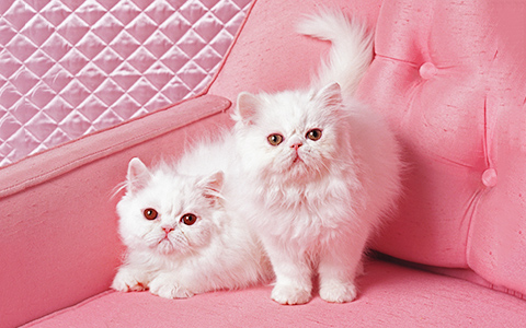 «Cat Sense» Джона Брэдшоу: о чем думают коты