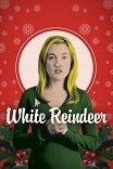 Белый олень / White Reindeer