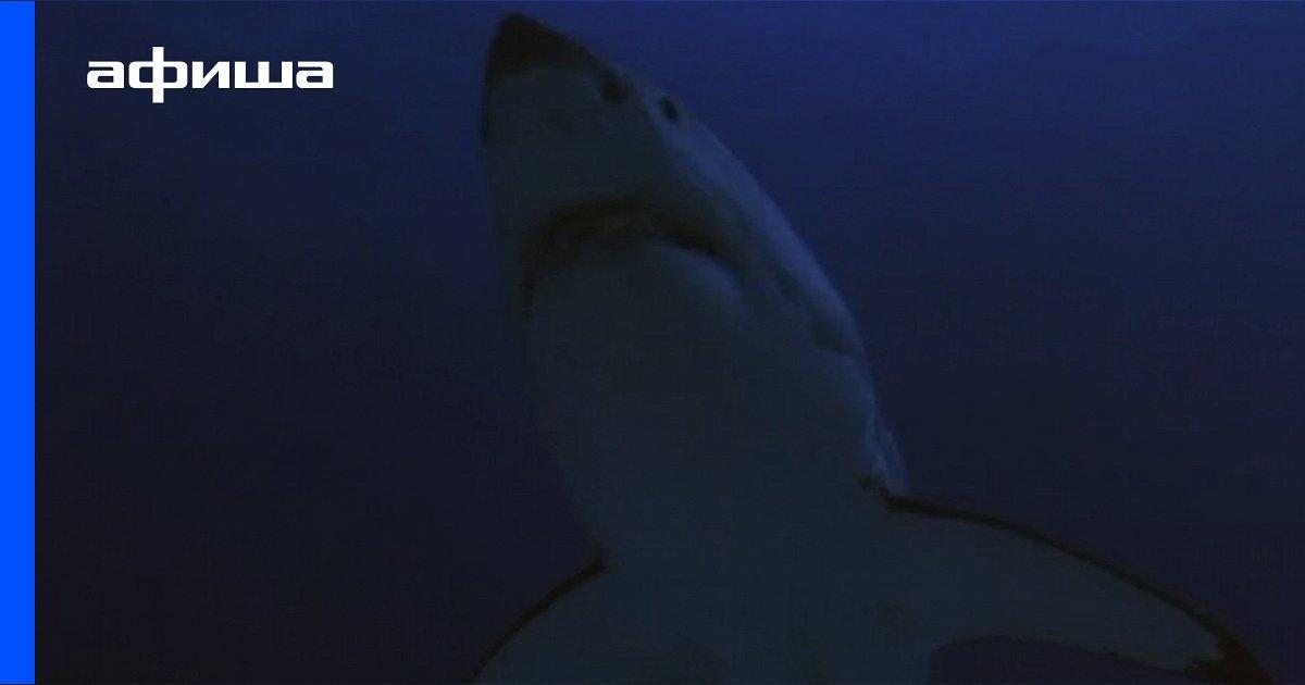 картинка акула бесите это