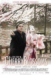 Постер Цвет сакуры