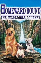 Постер Дорога домой: Невероятное путешествие