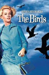 Постер Птицы