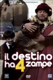 Четвероногая звезда / Il Destino ha 4 zampe