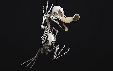 Как выглядят скелеты Багза Банни, Скруджа, Тома и Джерри