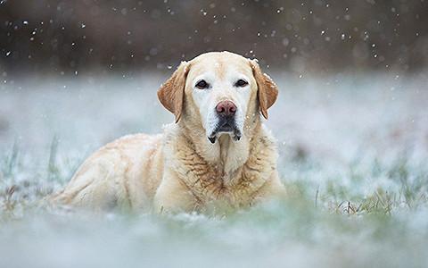 Как защитить собаку от догхантеров
