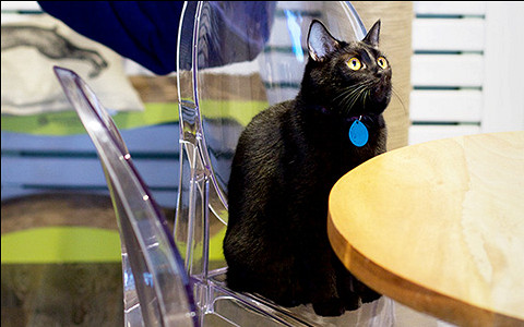Как устроено первое котокафе «Котики и люди»