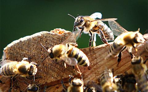 Как сделать современное искусство при помощи пчел, комаров и рыб