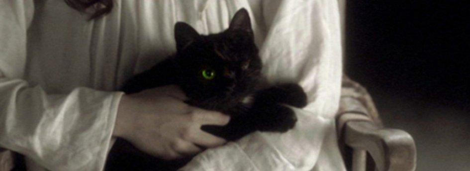 Кино: «Мастера ужасов: Черный кот»
