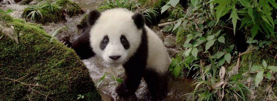 Кино: «Панды 3D»