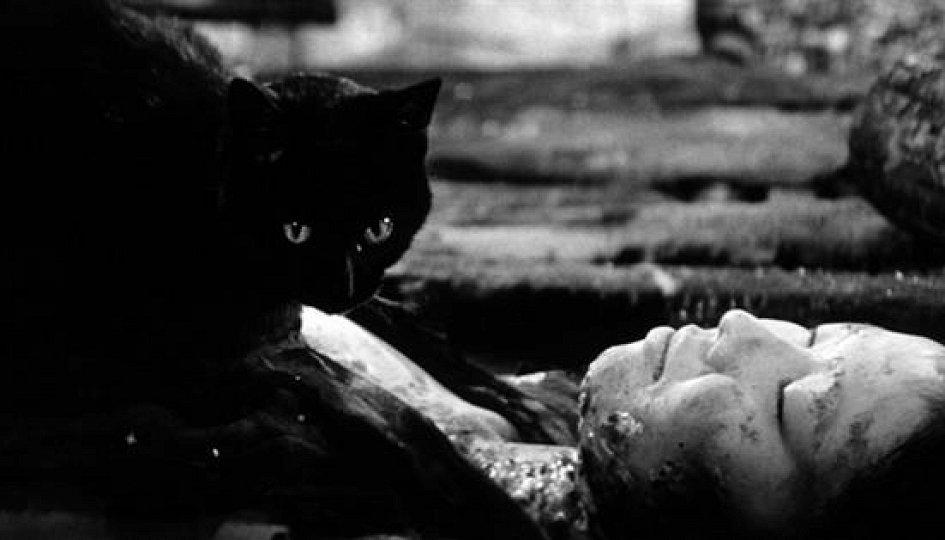 Кино: «Черные кошки в бамбуковых зарослях»