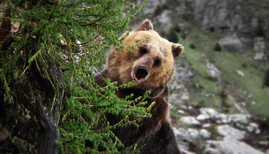 Кино: «Медведь»