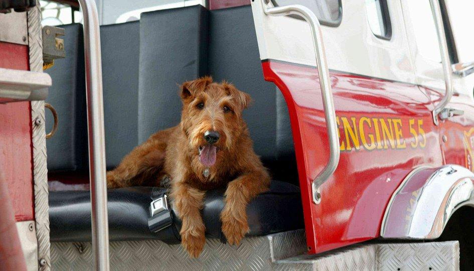 Кино: «Пожарный пес»