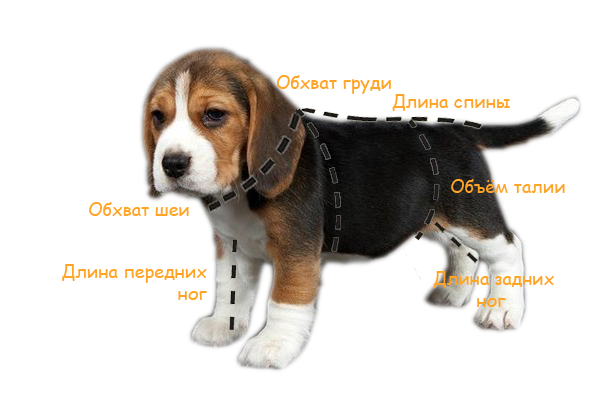 Размеры одежды для собак таблица на алиэкспресс на русском