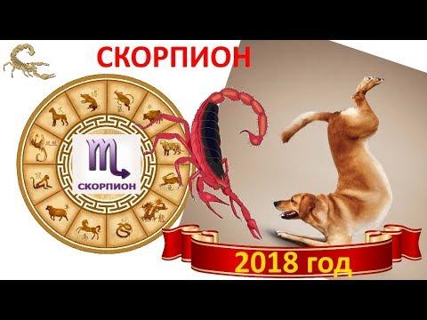Гороскоп скорпион   сегодня и завтра от павла глобы для женщин