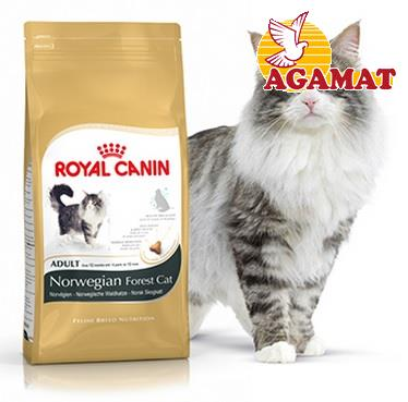 Norwegian корм royal canin
